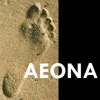 Aeona Coaching and Training
